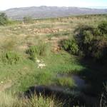 Bassa de Pelejano