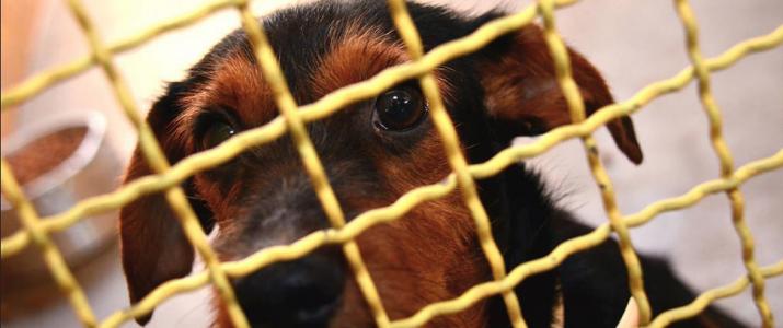 L'Ajuntament denuncia l'abandonament animal
