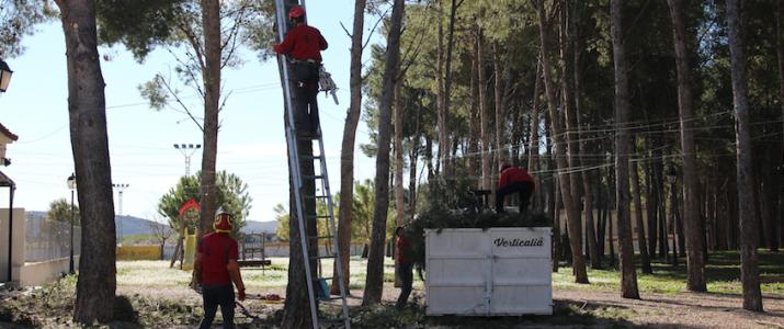 El pinar municipal es prepara per a l'estiu