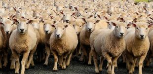 Jornada per a ramaders: ús de la via telemàtica