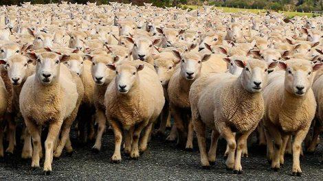 Jornada divulgativa de l'ús de la via telemàtica per a ramaders