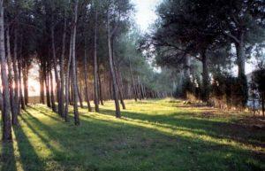 Pinar municipal de Benlloch